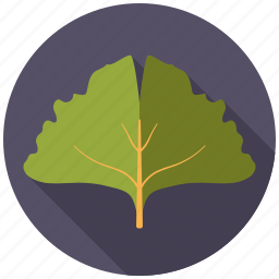 botany, ginkgo, leaf, nature, plant, tree icon