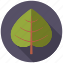 botany, leaf, linden, nature, plant, tree icon