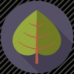 botany, leaf, linden, nature, plant, tree icon
