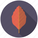 botany, copper beech, leaf, nature, plant, tree icon
