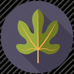 botany, fig, leaf, nature, plant, tree icon