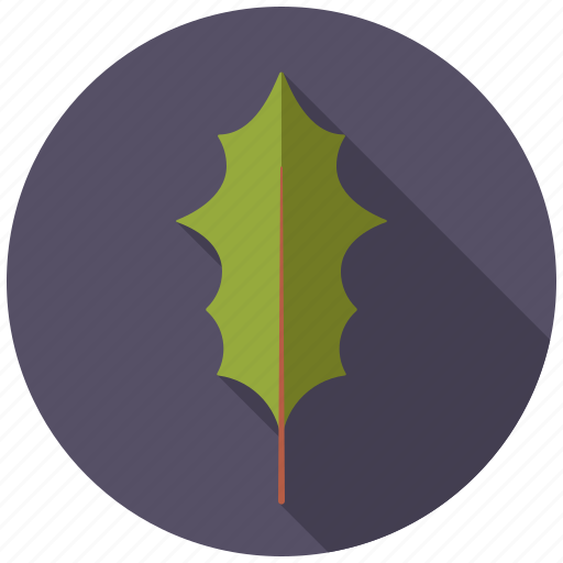 botany, holly, leaf, nature, plant, tree icon