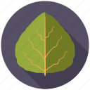 aspen, botany, leaf, nature, plant, tree icon
