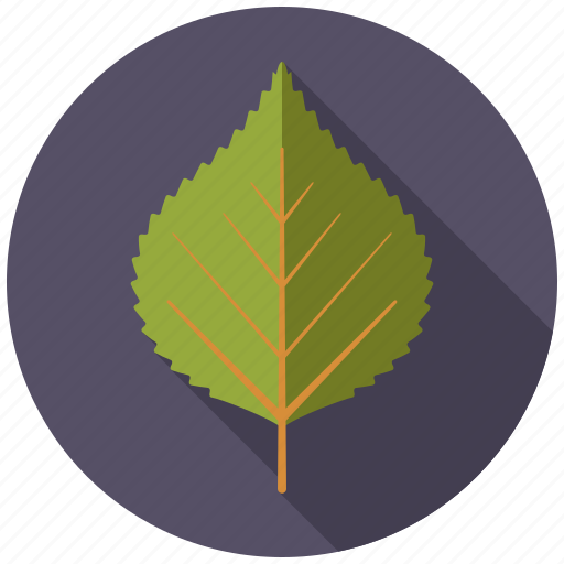 birch, botany, leaf, nature, plant, tree icon