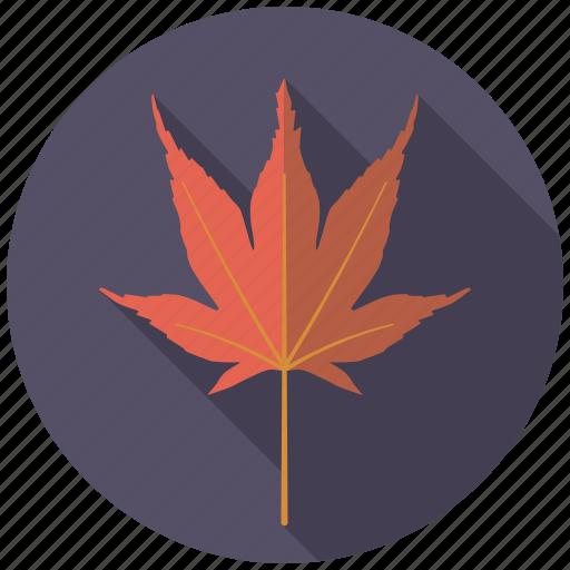 botany, japanese maple, leaf, nature, plant, tree icon