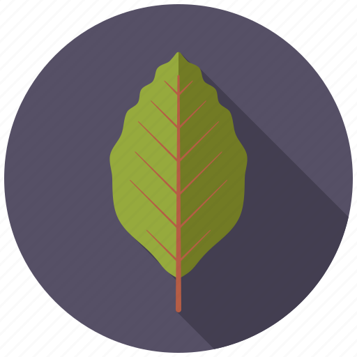beech, botany, leaf, nature, plant, tree icon