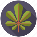 botany, chestnut, leaf, nature, plant, tree icon