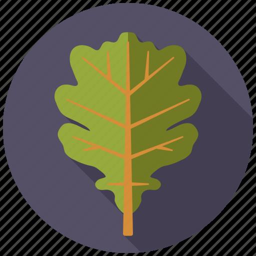 botany, leaf, nature, oak, plant, tree icon
