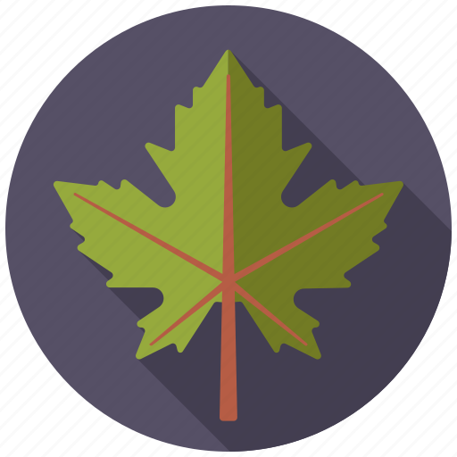 botany, leaf, maple, nature, plant, tree icon