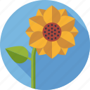 bloom, blossom, environment, flower, nature, plant, sunflower icon