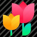 bloom, flower, plant, tulip