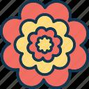 flower, gerbera, gerbera daisy, gerbera flower icon
