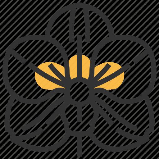floral, flower, nature, orchid, plant, vanda icon