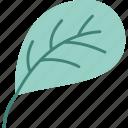 spring, floral, flower, plant, leaf