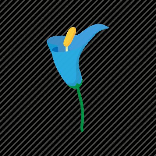 blue, calla, cartoon, floral, flower, nature, plant icon