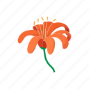cartoon, floral, flower, lily, nature, orange, plant icon