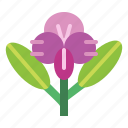 floral, flower, orchid, plant icon