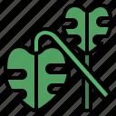 greenery, leaf, monstera, plant