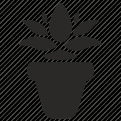 calendula, flower, home, plant icon