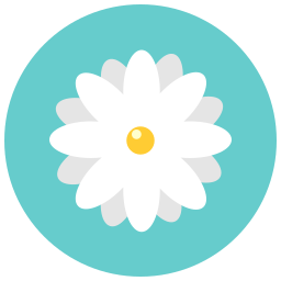 aroma, blossom, chamomile, daisy, flower, flowers, nature icon