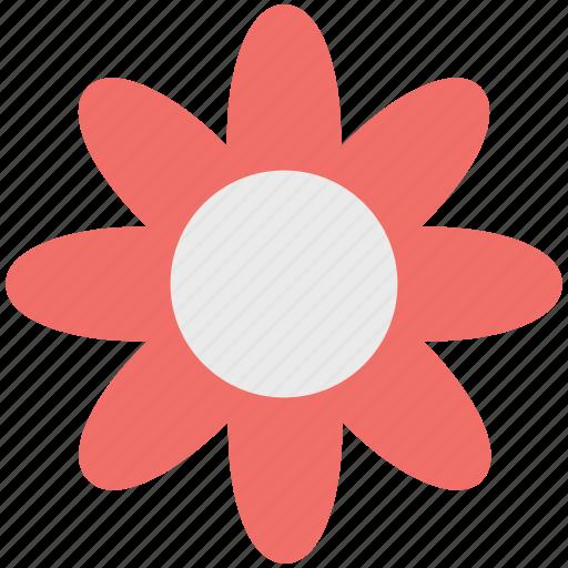 Anemone flower, bloom, flower, natural, petal, seasonal, spring icon - Download on Iconfinder