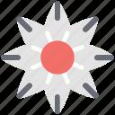 amaryllis flower, clematis, daisy, flower