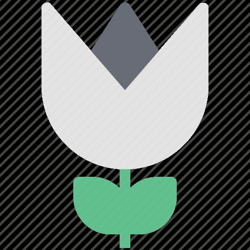 aquatic flower, blossom, flower, lotus bud, lotus bud open, petals icon