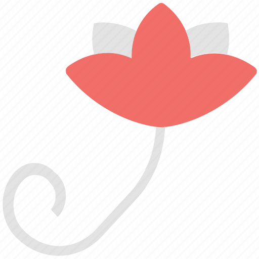 bloom, blooming flower, flower, organic rose, rose, rose bloom icon