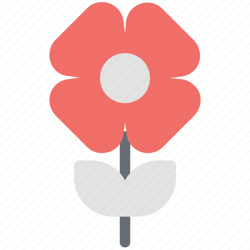 blossoming, floral, flower, rose, sagittaria graminea, spring flower icon