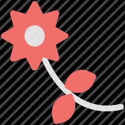 beauty, bud flower, flower, nature flower, orchid, violet flower icon