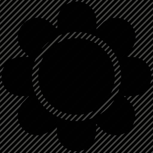 blossom, flower, petals, seed flower, sunflower icon