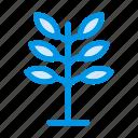 garden, gardening, leaf, leaves, nature, park, plant icon