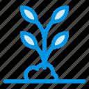 branch, flower, forest, garden, nature, plant, tree