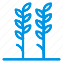 forest, garden, island, leaf, nature, plant, tree