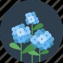 flowers, eco, floral, flower, garden, leaf, spring