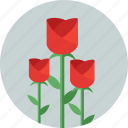 blossom, flower, flowers, garden, gardening, rose, spring icon
