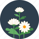 blossom, floral, flowers, garden, leaf, spring icon