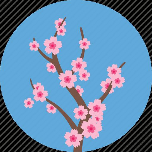 ecology, flower, flowers, garden, gardening, sakura, spring icon