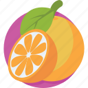citrus fruit, fruit, healthy diet, orange, organic icon