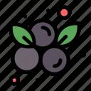 berry, blueberries, blueberry, fruit