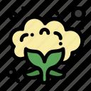 cauliflower, food, vegetable icon