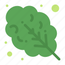 food, leaves, salad icon