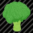 broccoli, food, fresh, healthy, isometric, object, organic