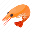 cooking, food, isometric, object, prawn, seafood, shrimp