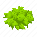 crops, farm, leaves, lettuce, vegetable icon