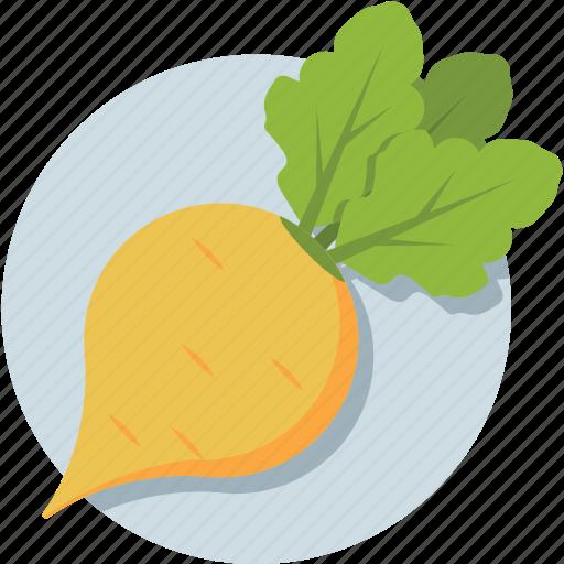 fodder radish, healthy food, organic, turnip, vegetable icon