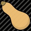 butternut, food, pumpkin, vegetable, yellow vegetable