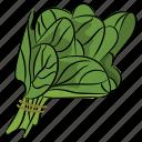 healthy vegetable, leafy vegetable, spinach, vegetable, vegetable leaves icon