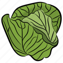 cabbage, cabbage flower, green vegetable, salad vegetable, vegetable icon