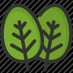 herb, leaf, spinach icon